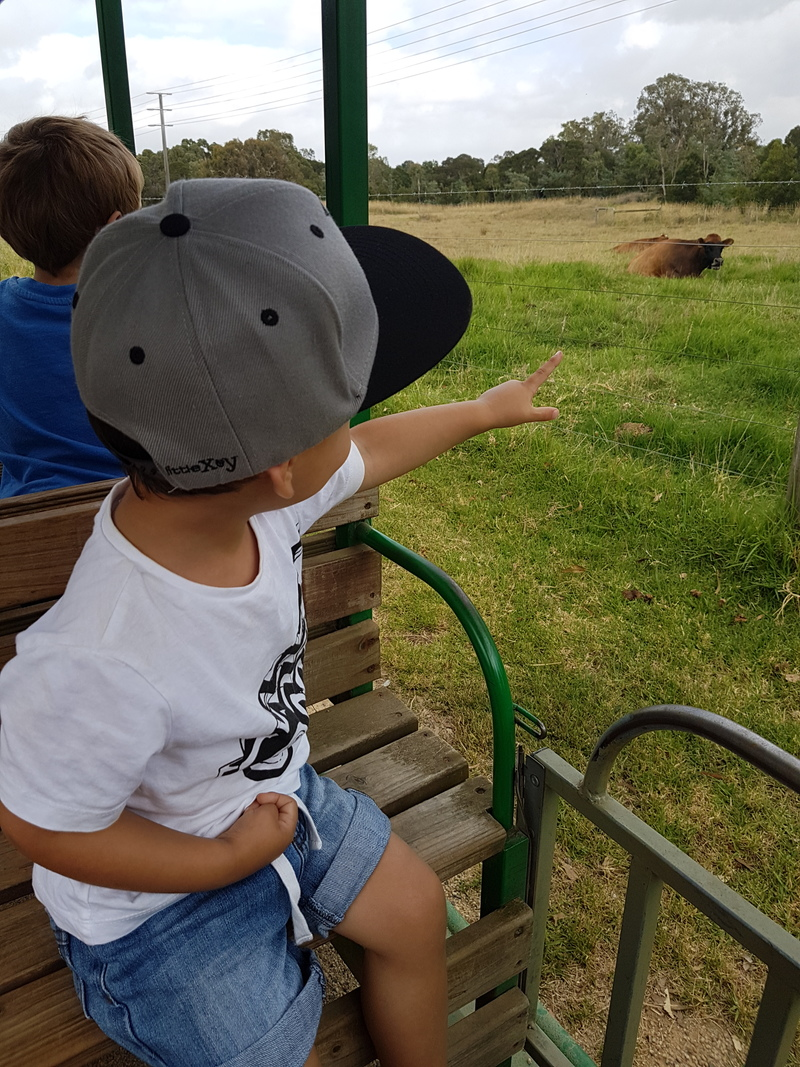 Animal spotting on the farm train
