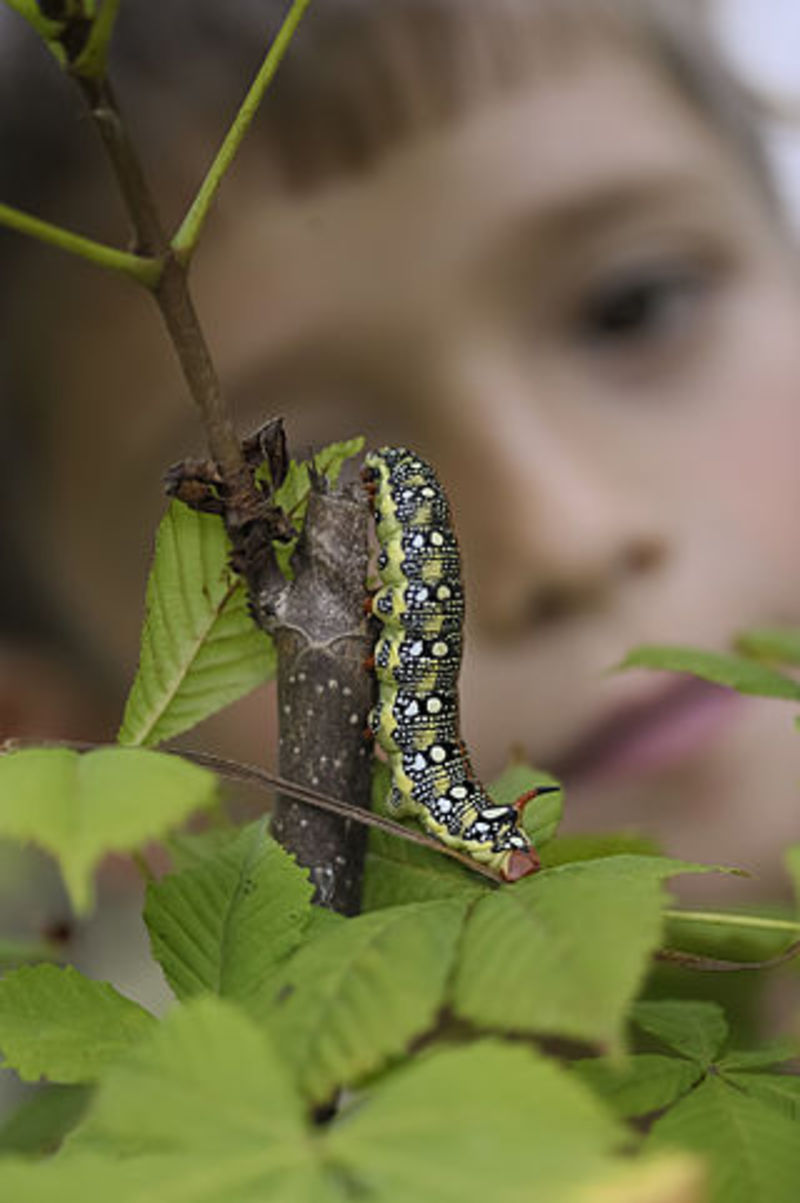 caterpillar
