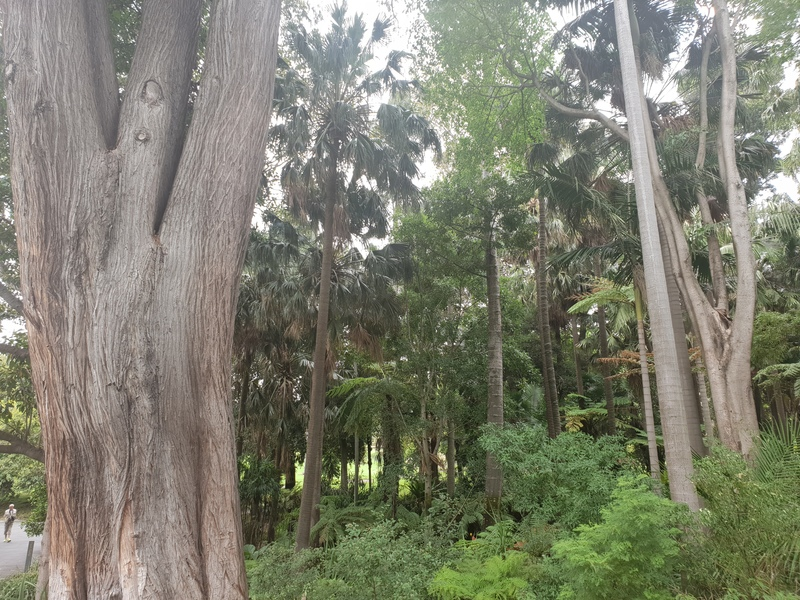 The Royal Botanic Gardens Victoria: Uncovered