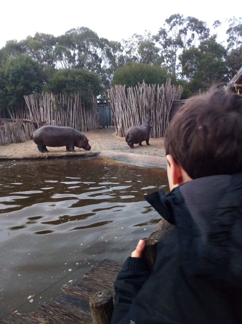 Wild Nights at Werribee Open Range Zoo