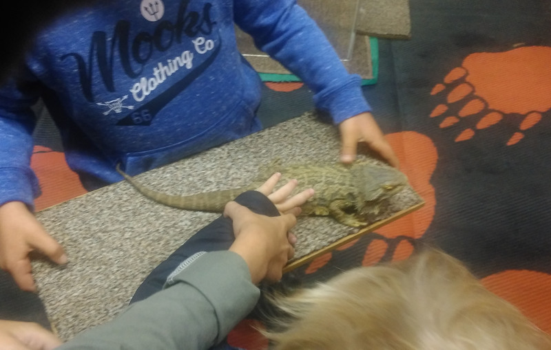 Reptile Encounter Workshop with Eco Explorers
