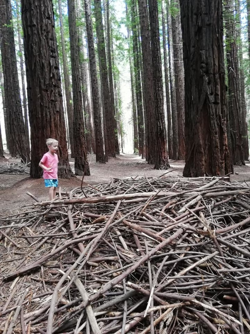 Why you should visit the Redwood Forest in Warburton