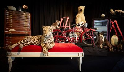 Tableau of Museums Victoria Collection objects Ben Healley