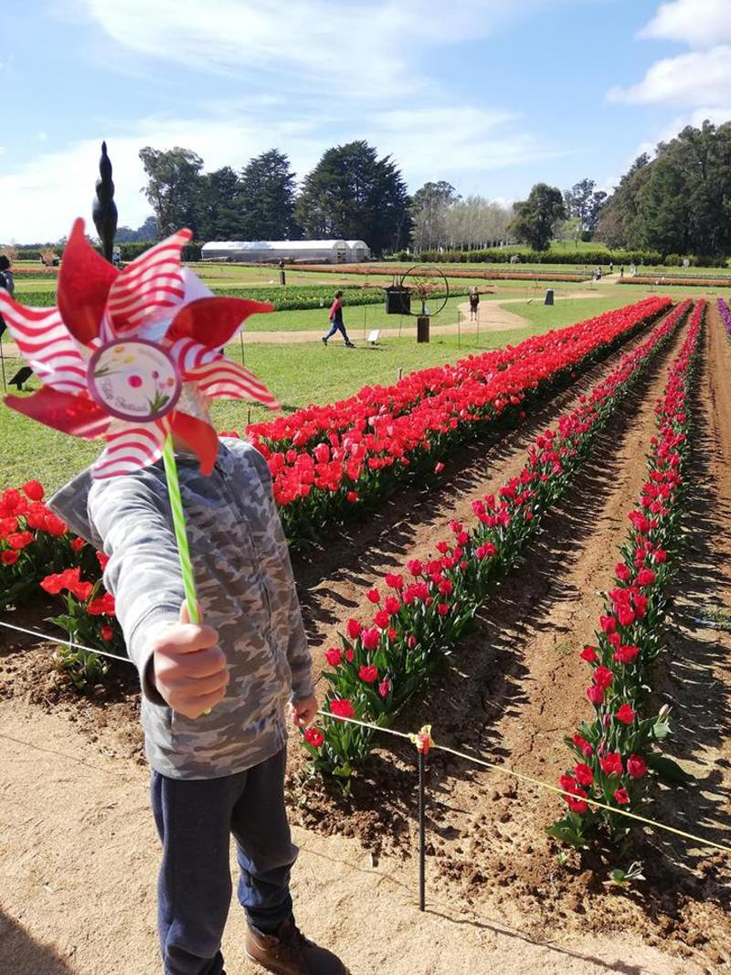5 Reasons to Visit the Tesselaar Tulip Festival with Kids