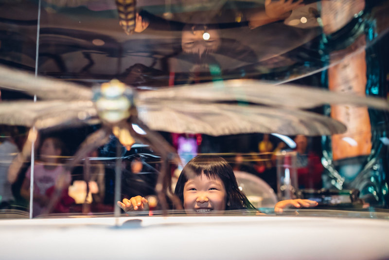 Bug Lab: Little Bugs, Super Powers at Melbourne Museum